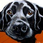 Pet Portrait   Brando   Claire Dunaway Studios