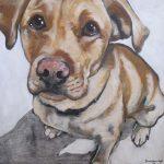 Pet Portrait   Foster   Claire Dunaway Studios